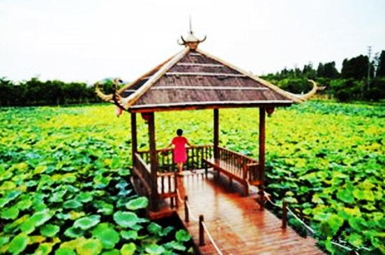 自从乡村音乐节从国外引进,在中国就成了星星之火,席卷中国各大特色的景区,大有遍布草原之势。而斗门市莲江景区作为一个新型生态农业体验景区,去年为了吸引游客,也时髦得举办了首个乡村音乐节,结果好评如潮,备受游客称赞,因此音乐节也成为了斗门莲江旅游宣传名片之一。 而今年景区当然也不负众望,继续举办音乐节。据悉,今年的音乐节在美丽的十里莲江景区的稻田里开唱,在蓝天白云下、春意盎然中,清风抚歌而来、当是令人陶醉在这世外桃源。主办方还透露,此次将邀请中国好声音、中国好歌曲等知名歌手前来献唱,众多实力派歌手齐