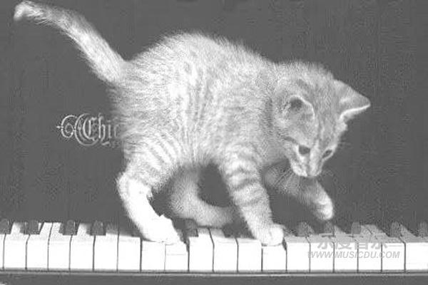 肖邦:《小猫圆舞曲》